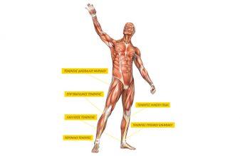 Runner's Anatomy: Οι τένοντες