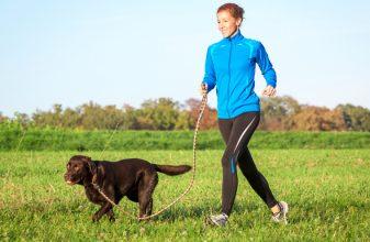 Κάντε τον σκύλο σας δρομέα