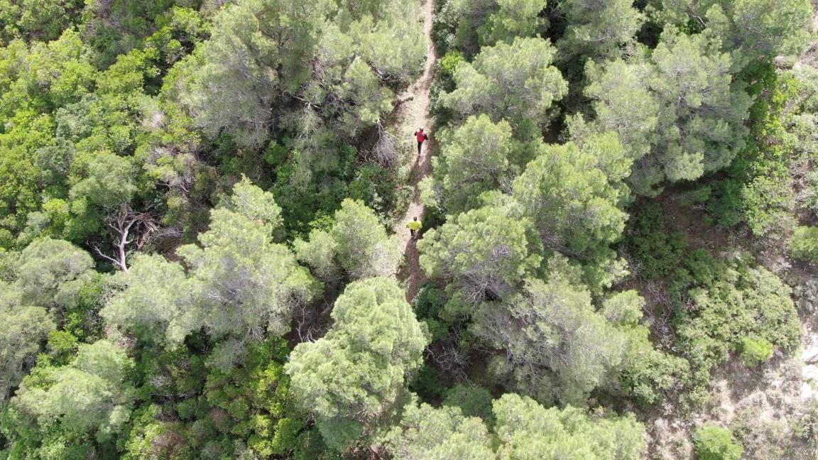 Skyros Trail Run 2020
