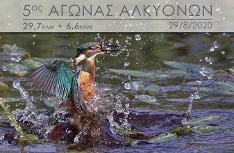 5ος Αγώνας Αλκυόνων